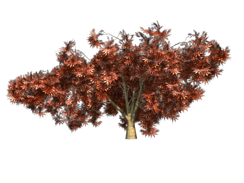 File:Greenhouse-jap-maple-red.png