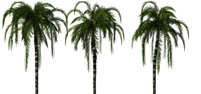 File:Greenhouse-palm-jubaea.jpg