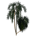 Greenhouse-Palm-acai02.png
