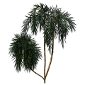 Greenhouse-Palm-acai03.png