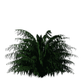 Greenhouse-Palm-cycas01.png