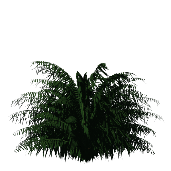File:Greenhouse-Palm-cycas01.png