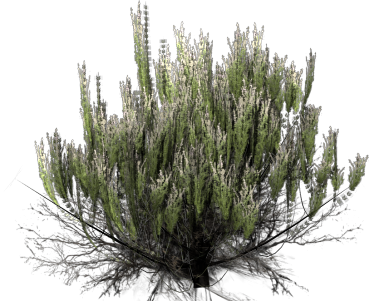 File:Sagebrush-alpha.png