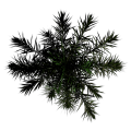 Toptree-palm01.png