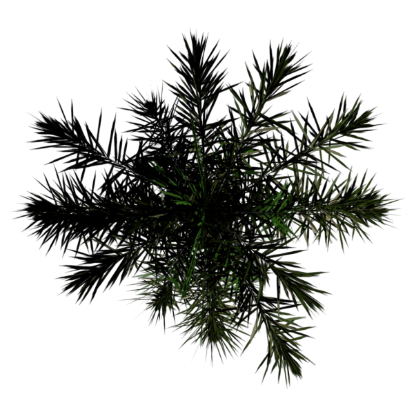 File:Toptree-palm01.png