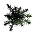 Toptree-palm02.png