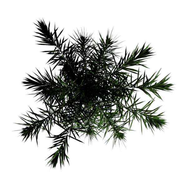 File:Toptree-palm02.png