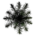 Toptree-palm03.png