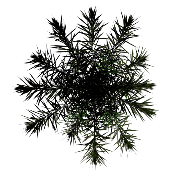 File:Toptree-palm03.png