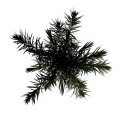 Toptree-palm04.png