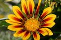 Fleur Jaune 463.jpg