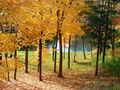 Paysage d'automne 164.jpg