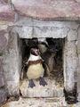 Pingouin 107.jpg