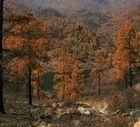 Dalmatie incendie.jpg