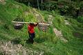 Rizière à Bali 1034.jpg