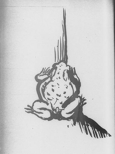 Crapaud Bonnard jpg