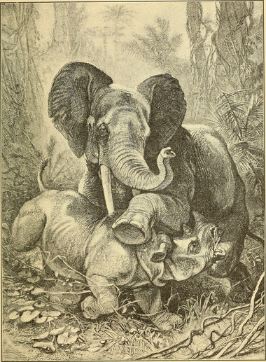 Eléphant vs Rhinocéros - Brooks