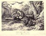 Lion Sanglier jpg