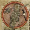 Chouette Oiseau jpg