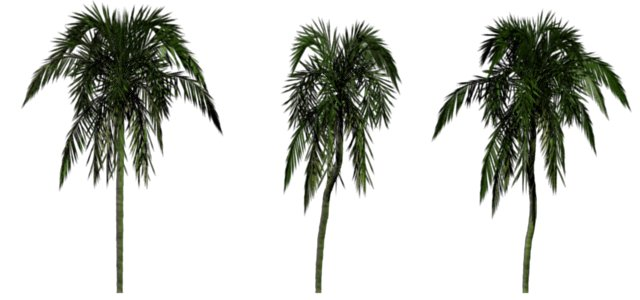 Greenhouse-palm-arecaceae.jpg
