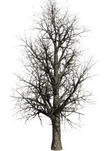 Wintertree.png