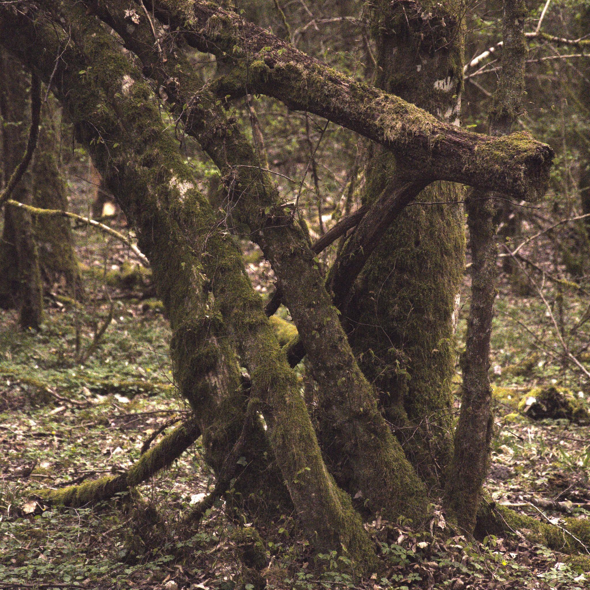 Twisted Trees III