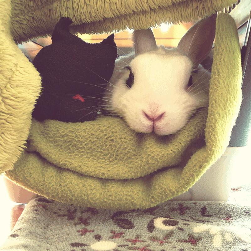 Vue de face dans une boîte de transport habillée de tissus en microfibre vert anis dépassent la tête d'une lapine hermine et celle gris foncé de sa peluche Raymond