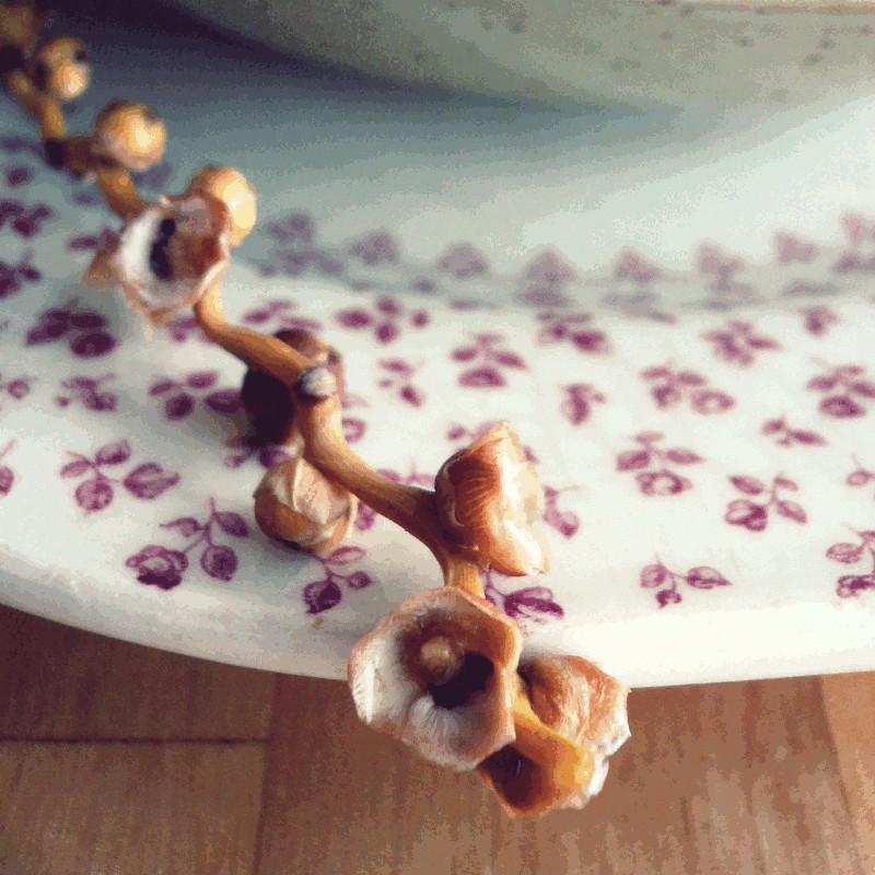 Sur une assiette rétro décorée de petites fleurs vieux rose la tige végétale des fruits du dattier