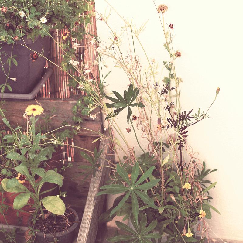 Portion de balcon avec bois, bambou, pot et jardinière d'où se dressent des vivaces, des graminées blondes et mauves et un souci jaune
