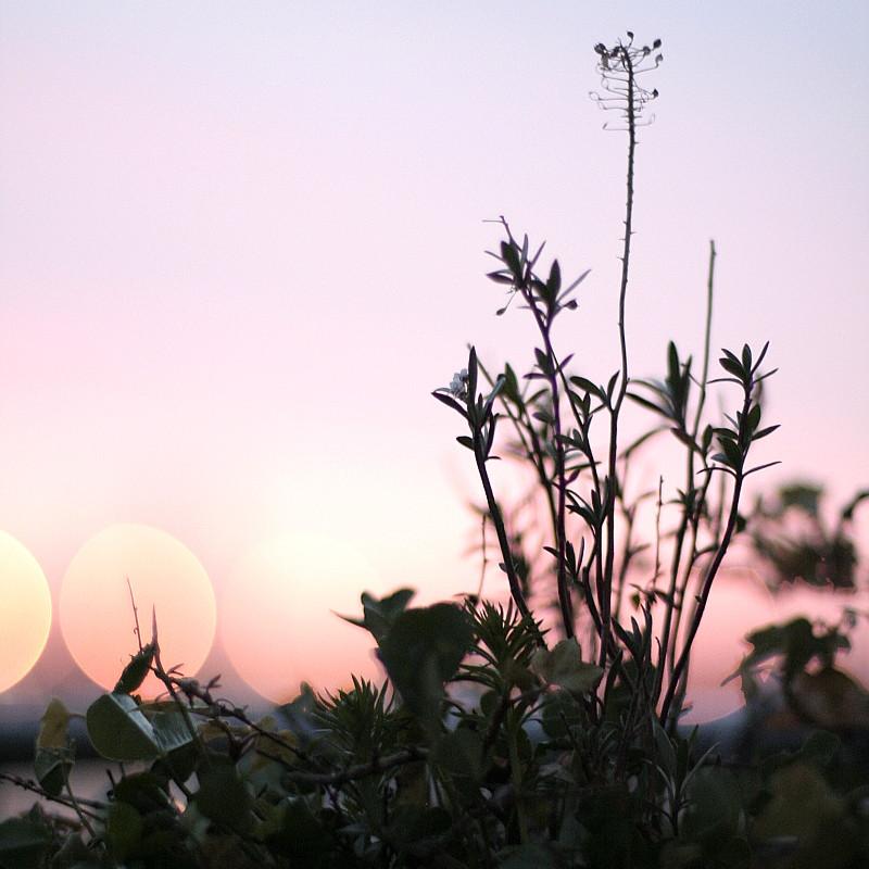 Dentelles de fins feuillages dans une jardinière et le faux jour d'un coucher de soleil laiteux