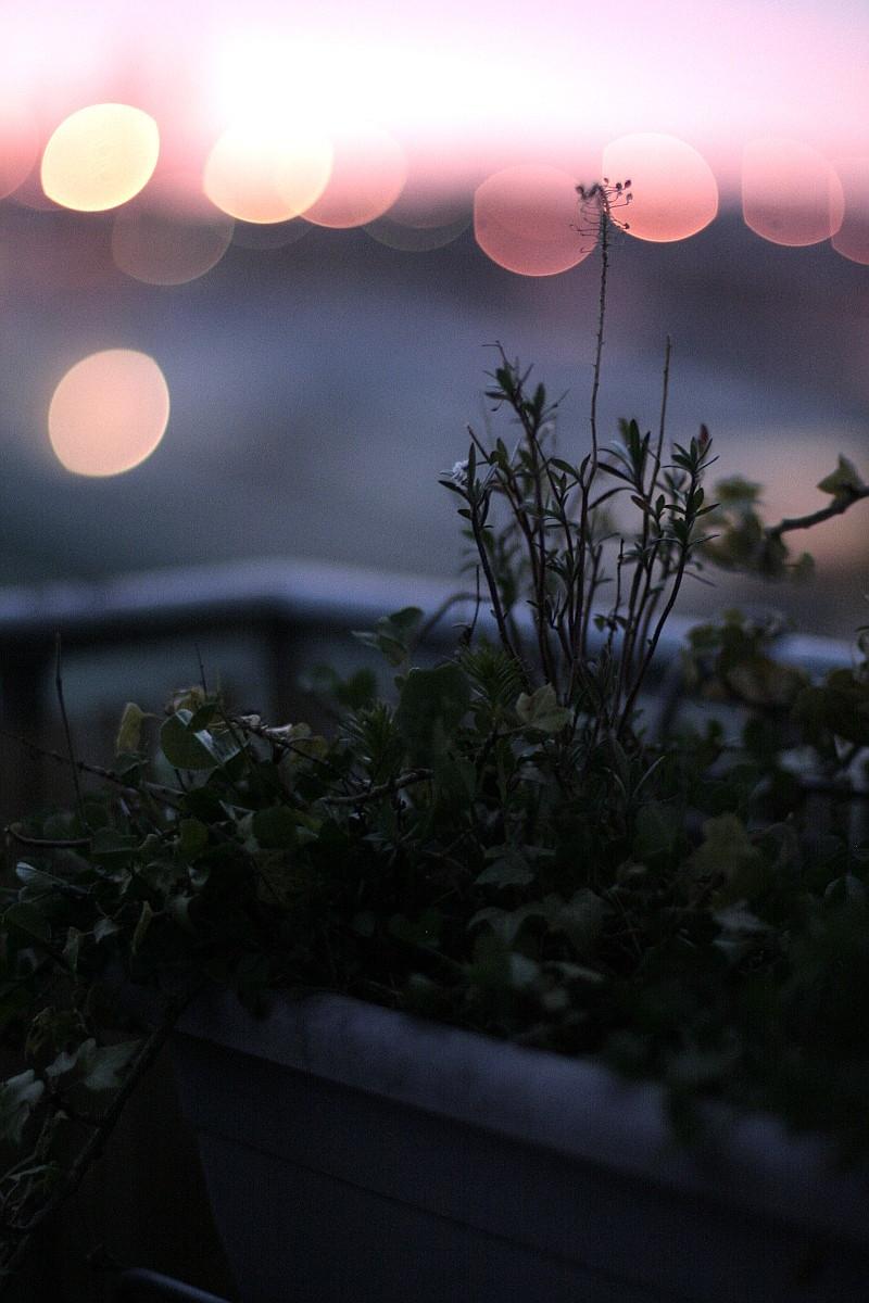 Retour sur la jardinière bombée de lierres, de trèfles et de repousses de vivaces dans une lumière veloutée de bleue parme et de lens flare rosés