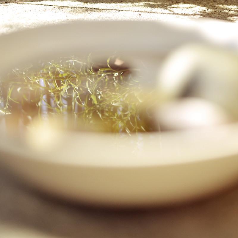 Gros plan sur le reflet dans l'eau de l'assiette grise de tiges à petites feuilles effilées vert tendre