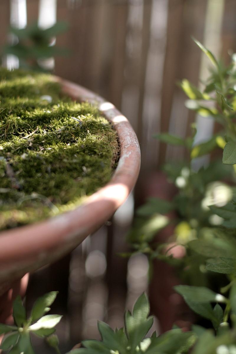 Dans la pénombre du bambou percé de rayons de soleil du matin, entourée de feuilles verticilées d'un vert bleu velouté, gros plan sur le bord d'une coupelle en terre cuite dans laquelle on devine un lit de mousse
