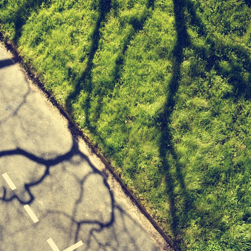 Un triangle d'herbes vertes de pelouse qui pousse librement au bord du bitume d'une place de parking sous l'ombre majestueuse d'un arbre aux branches noueuses