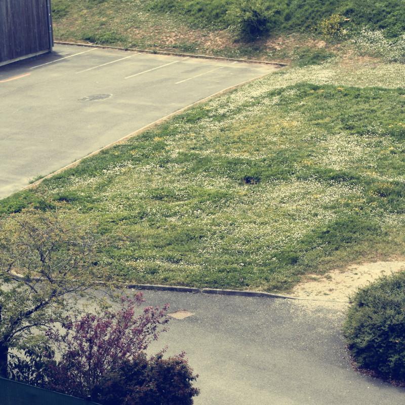 Au loin un parterre de pelouse où fleurissent des nappes de pâquerettes et de boutons d'or