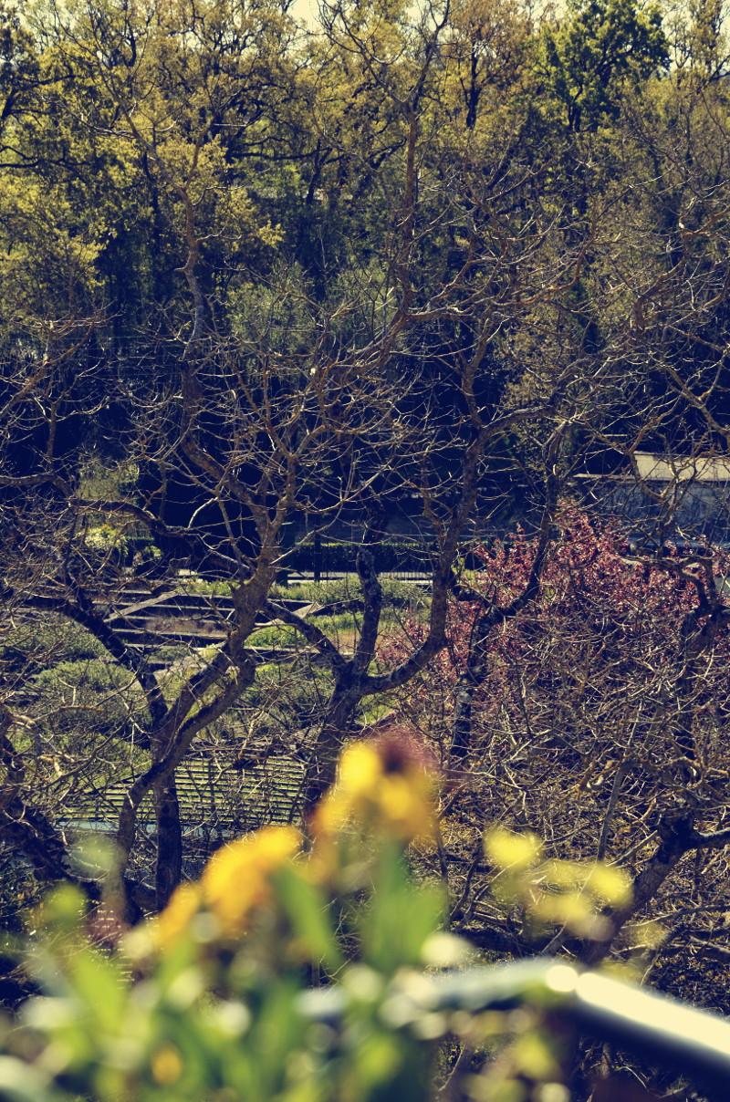 Millefeuille d'un vert ambré et de rose doré, d'arbres, de parterres de pelouse et de bassins d'eau, au delà d'une rambarde de balcon fleuri