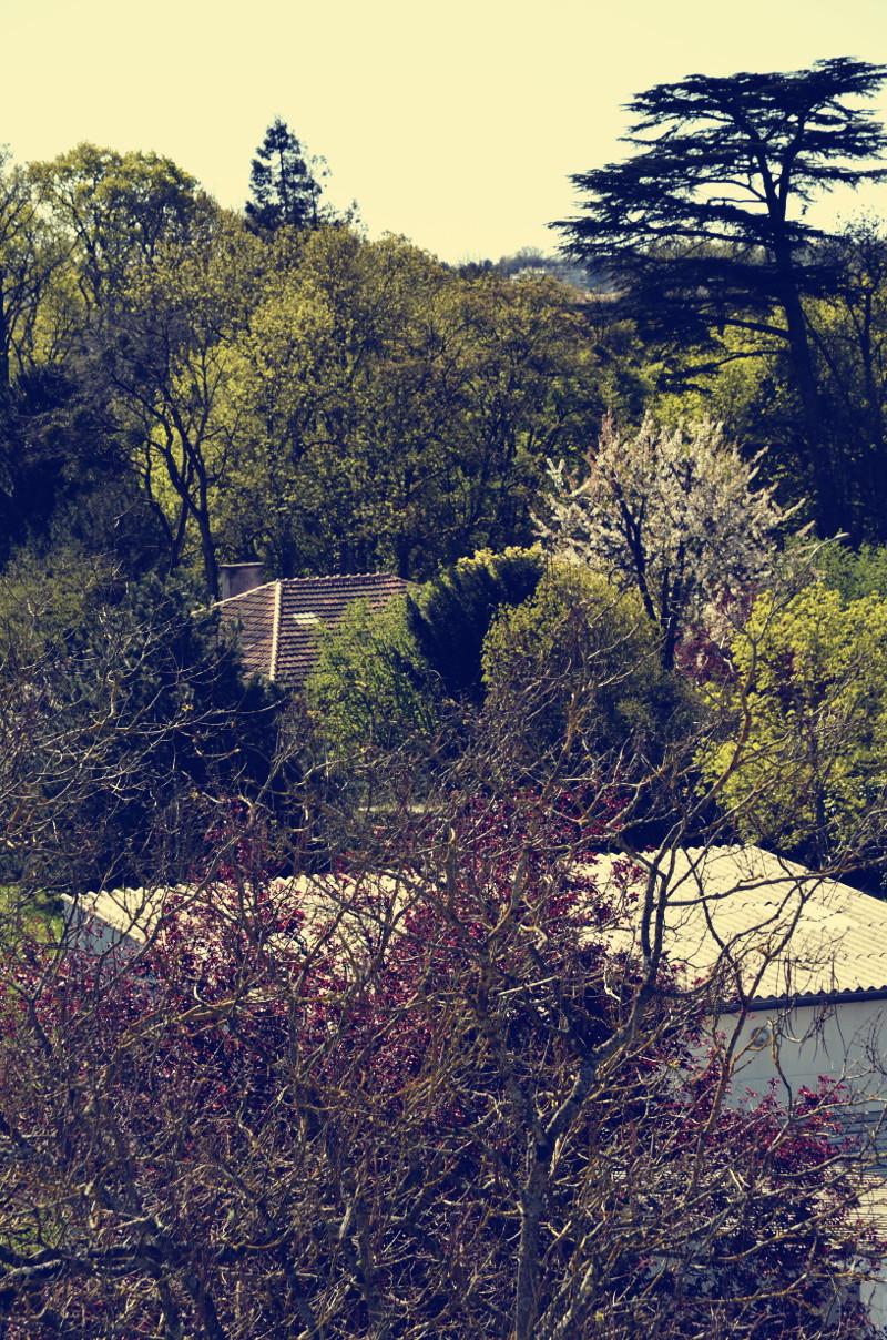Sandwich d'arbres vus de loin et d'essences diverses, vert foncé, vert kaki ou vert tendre, à fleurs blanches, feuilles rouges foncées ou branches encore nues