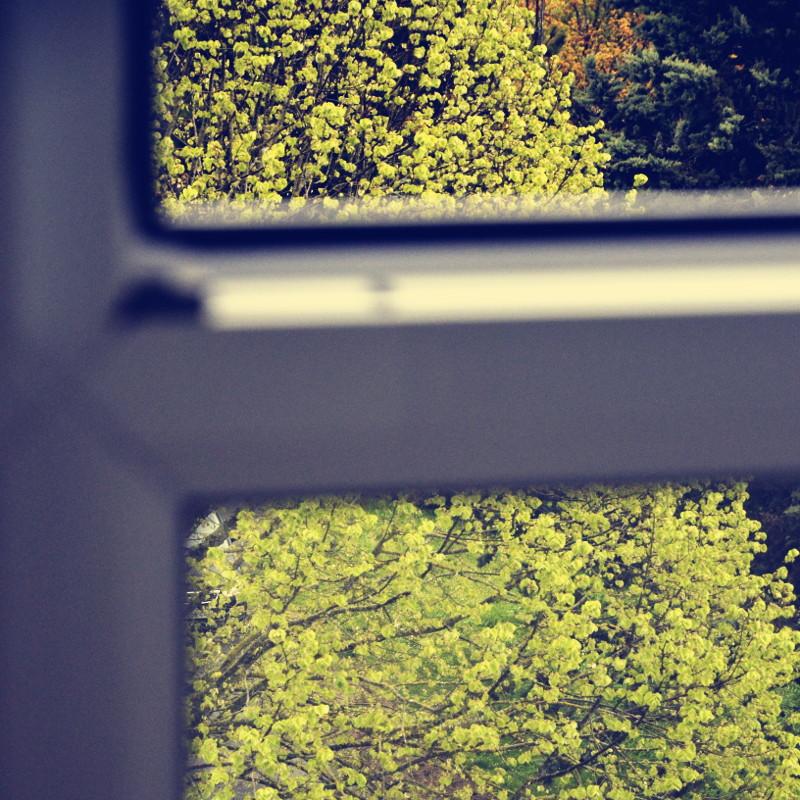 Entre le cadre d'une fenêtre, au loin un arbre aux feuilles nouvelles encore en boules froissées comme des pompons
