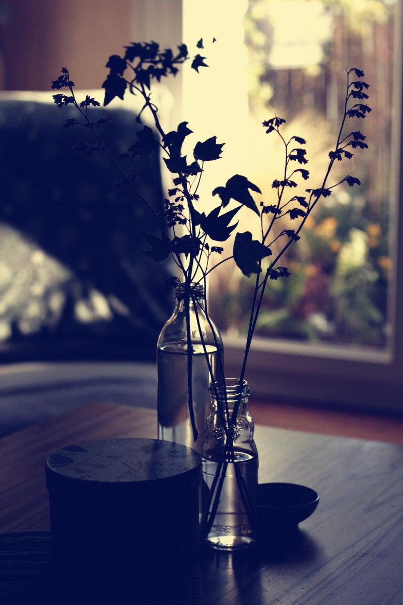 Sur une table basse en bois dans un salon en contre-jour, une boîte ronde et des bouteilles en verre remplies d'eau et de brins du désespoir du peintre et d'une tige de lierre, dans le fond on devine un fauteuil bas et le soleil qui se couche sur le jardin en pots d'un balcon