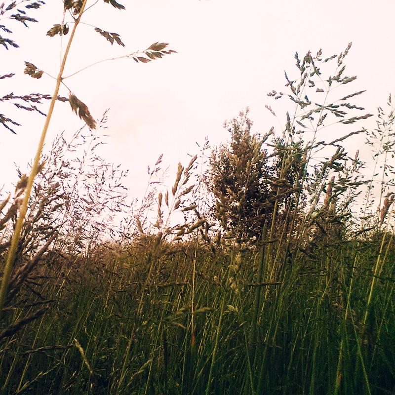 Dans un près, vue en coupe sur la densité d'herbes et graminées sauvages