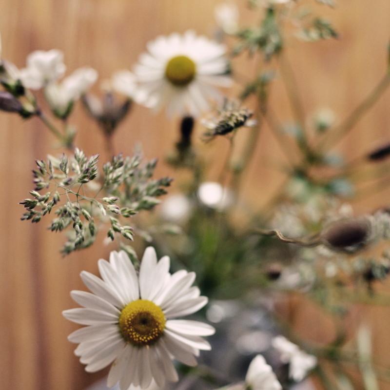 Un bouquet de quelques marguerites et compagnons blancs garni d'agrostis aux contours mauves