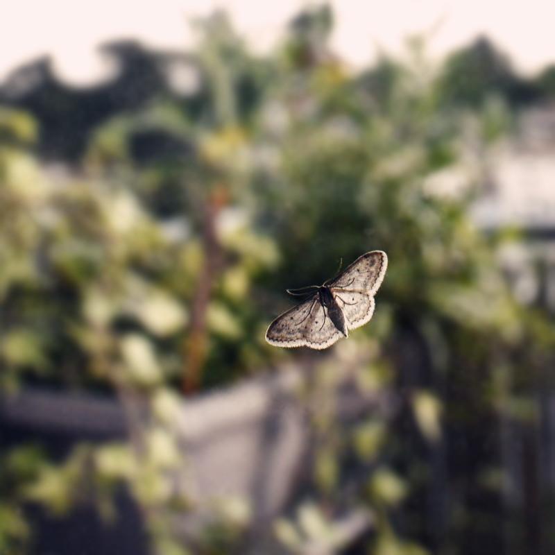 Gros plan sur la dentelle des motifs bruns des ailes écrues d'un petit papillon de nuit posé sur une vitre donnant vue en flou sur la jardinière d'un balcon