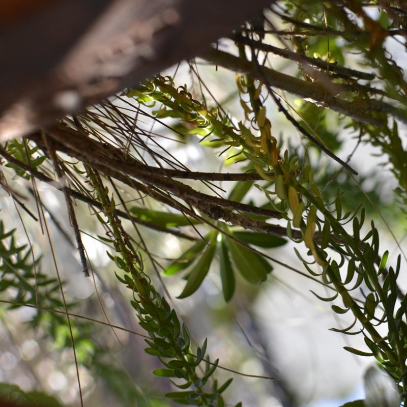 À contre jour, sous le soleil, des tiges de fleurs à petites feuilles tombent d'une jardinière