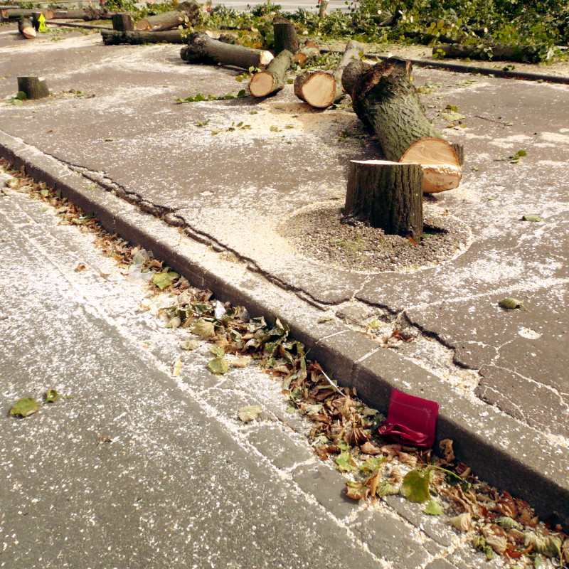 On a craqueled pavement, in the middle of leaves and branchs lying on the edge, a line of chopped stumps and trunks