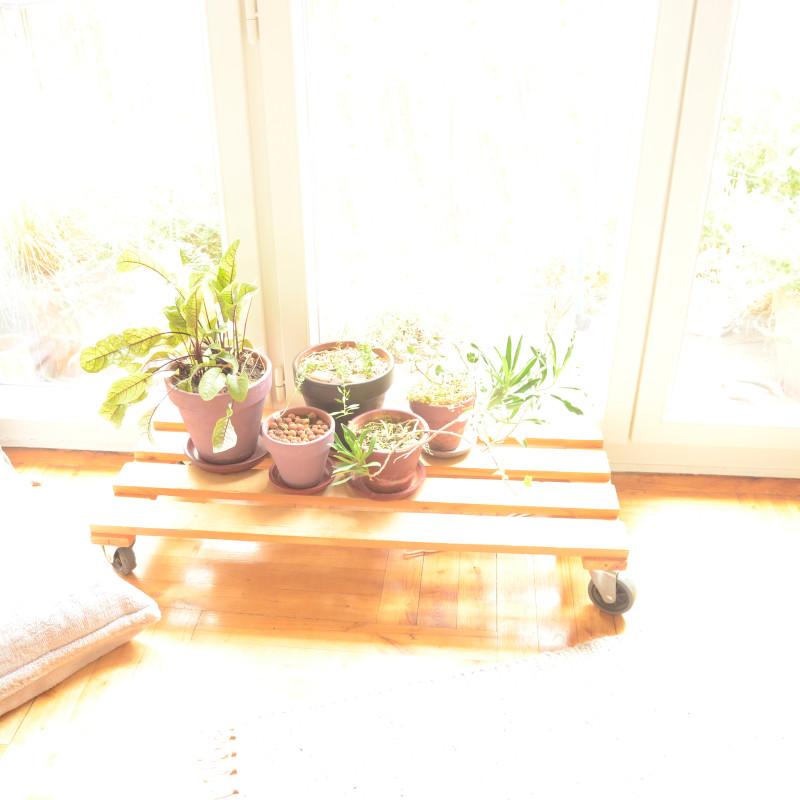 Devant une triple portes-fenêtres, une planche de palette sur roulette supporte des pots en terre cuite où se reposent des plantes du balcon mises à l'abri pour l'hiver