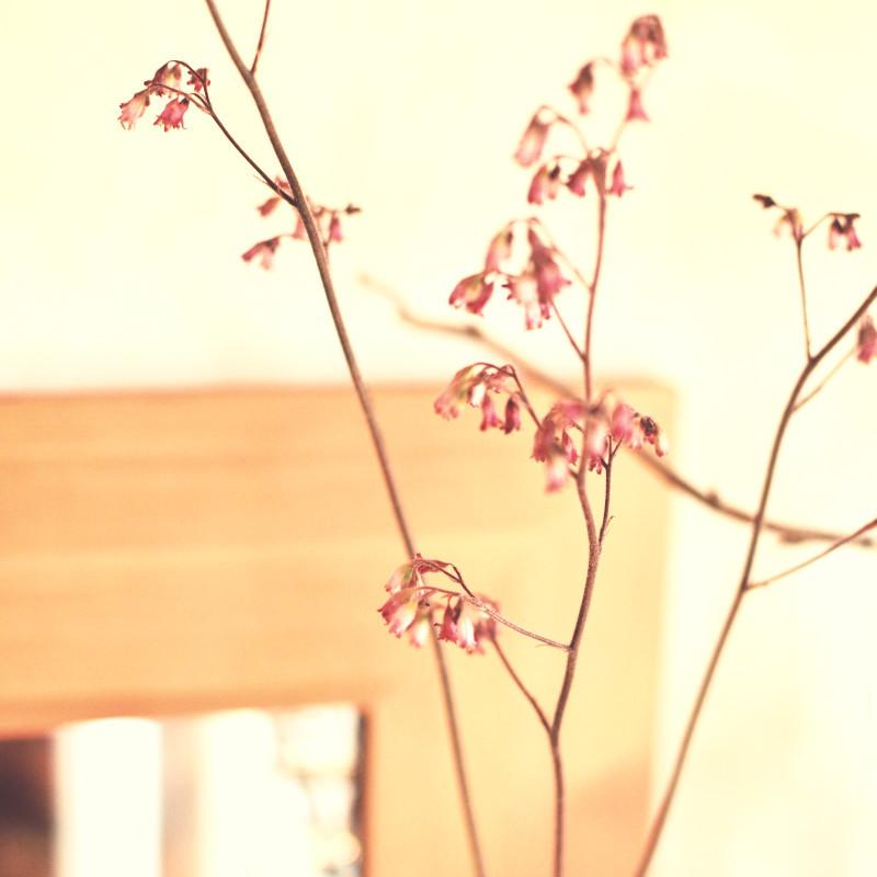Des tiges parsemées de fleurs du désespoir du peintre d'un mauve rosé, derrière et dans le flou un mirroir carré dans un cadre en pin